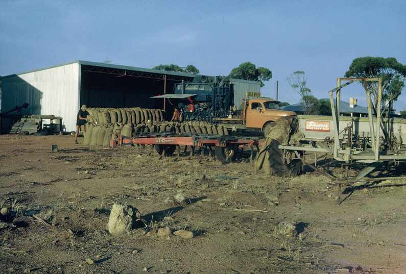 Ross collection: Wheat grading by contract grader, scarifier and Shearer seeder in foreground